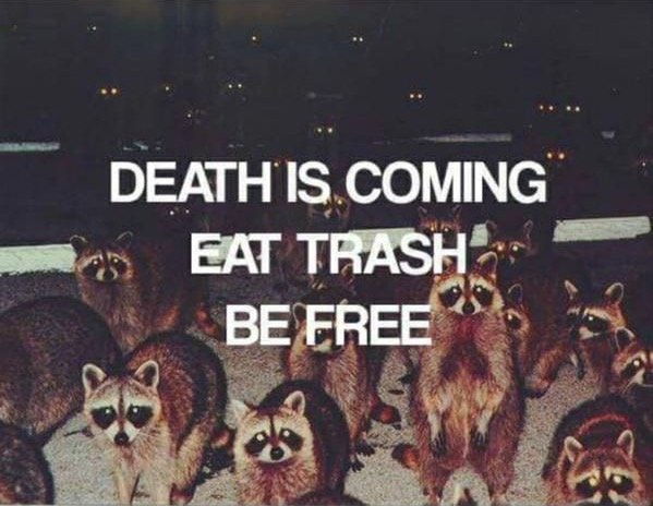 """a group of raccoons looking at the viewer with text """"death is coming, eat trash, be free"""""""